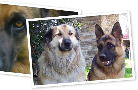 Education des chiens, pension familiale, stages canin, Albi, Tarn